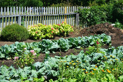 vegetable-garden-wooden-fenced-compost-pile-corner-kabbage-kale-broccoli-flowers-85992964